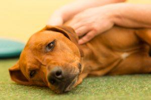 Physiotherapie für Tiere